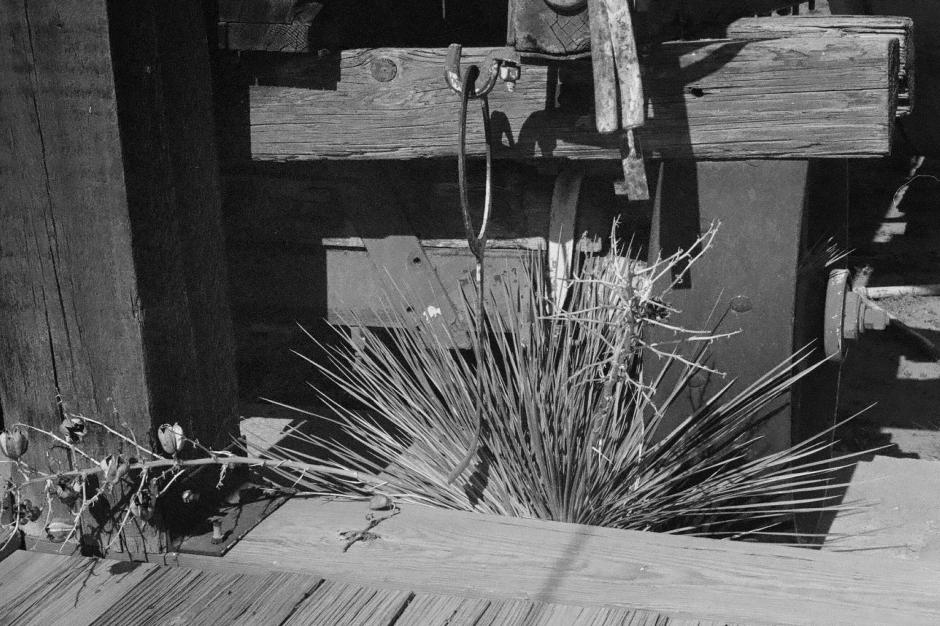 Desert brush reclaiming territory in the museum display yard.