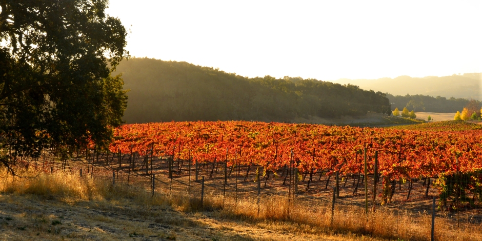 Morning Vineyard picture at intersection of Highway 46 and Vineyard Rd, Paso Robles.